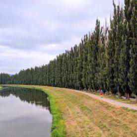 Topole pri rieke Nitra