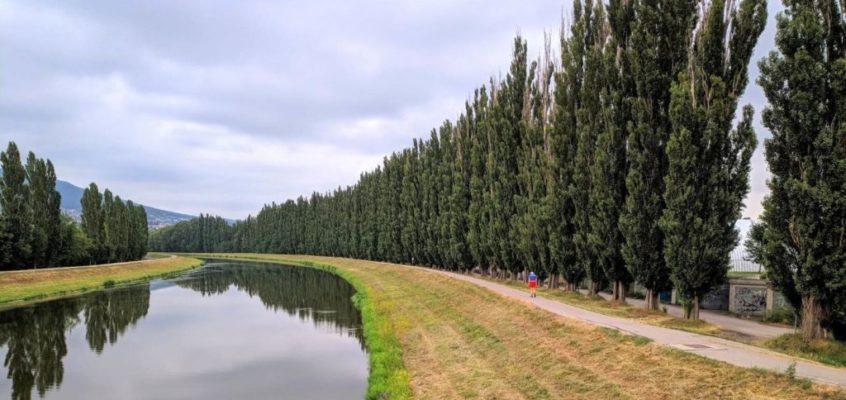 🌳Užitočné stromy – Topole