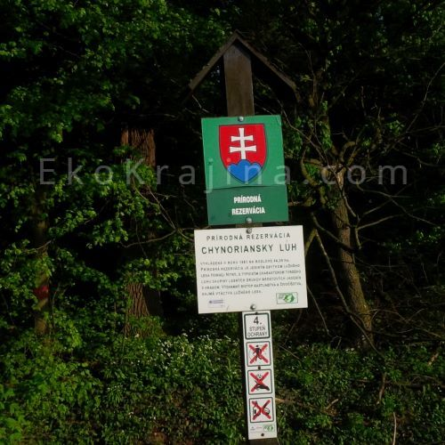 prírodná rezervácia Chynoriansky háj
