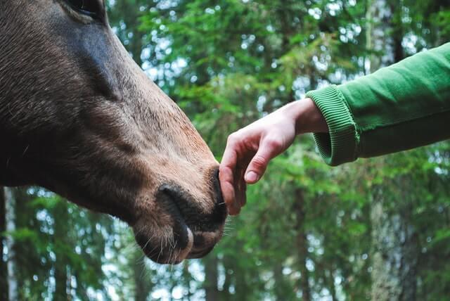 človek a kôň