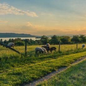 Agroturistika a vidiecky cestovný ruch