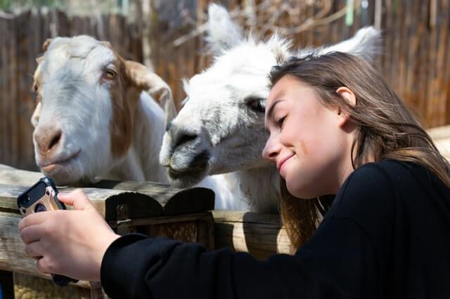 Dievča a kozy