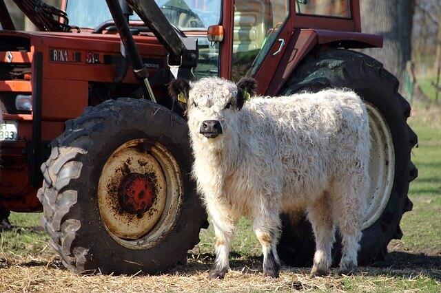Telianko pri traktore na farme
