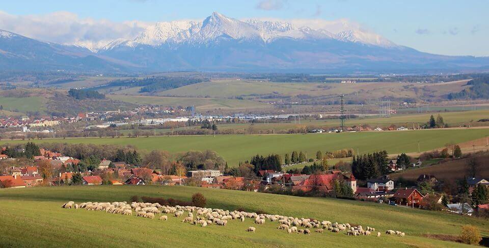 Ovce pod Kriváňom