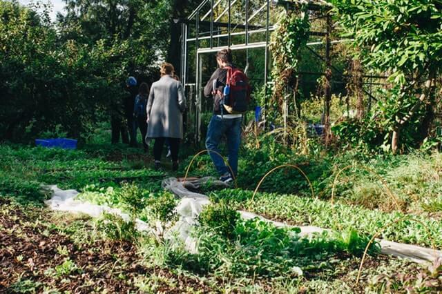 Turisti na farme