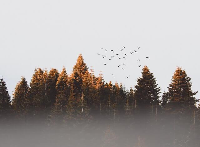 les s kŕdľom vtákov