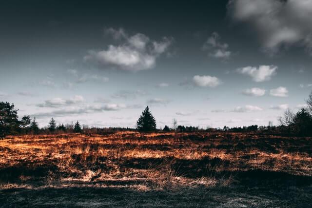 horiaca tráva