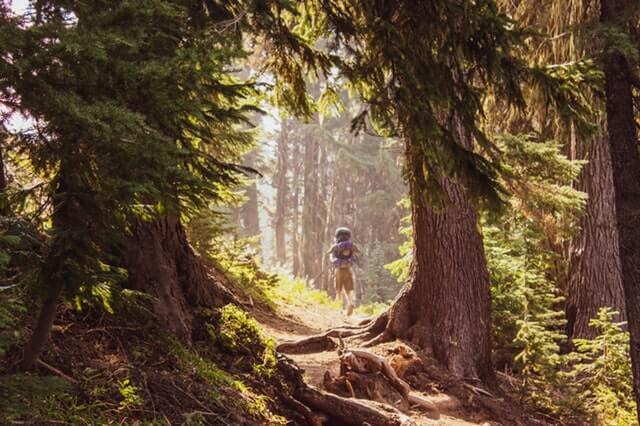 turista v lese