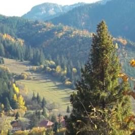 Význam a ochrana lesa