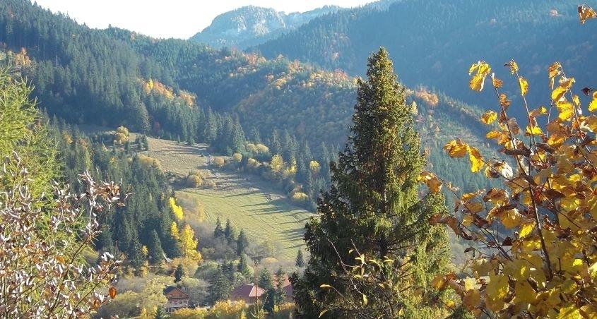 Význam a ochrana lesov