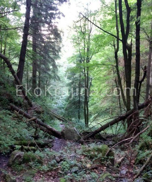 Brtkovičná dolina v Liptovskej Porúbke